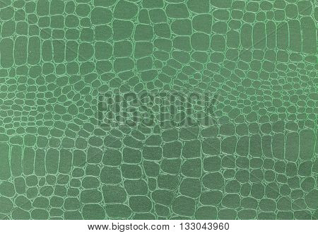 Green leather texture background. Closeup photo. Reptile skin. The skin of a crocodile or a snake
