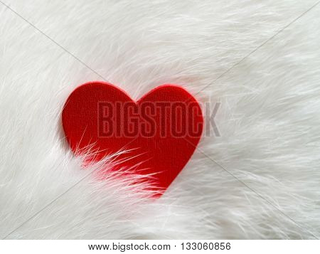 Valentines day background with red heart on white cat hair. Happy Valentine's day. Valentines day card. Love and Valentine concept.
