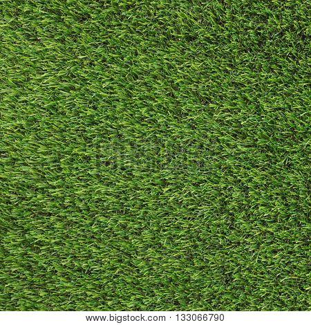 close up Artificial Grass Field Top View Texture