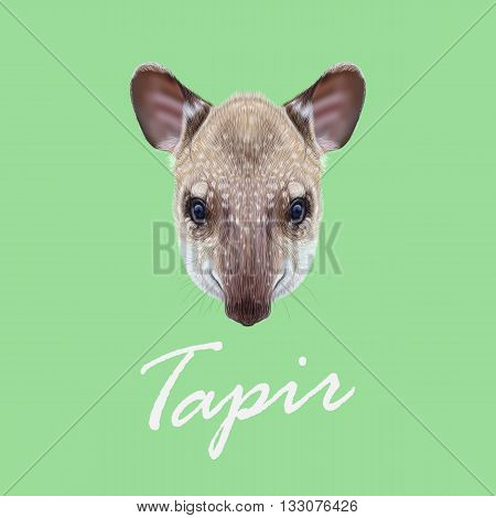 Vector Illustrated Portrait of Tapir. Cute face of young wild Tapir on green background.