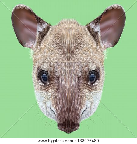 Illustrated Portrait of Tapir. Cute face of young wild Tapir on green background.