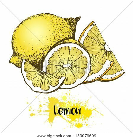 Vector hand drawn illustration of lemon or lime fruit. Yellow color summer fresh citrus fruit isolated on white background. For cocktail smoothie desserts and salsds.