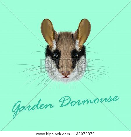 Vector Illustrated Portrait of Garden dormouse. Cute face of fluffy Garden dormouse on green background.