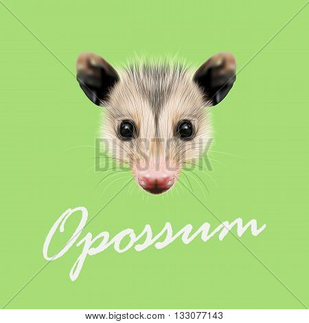 Vector Illustrated Portrait of Opossum. Cute fluffy face of Opossum on green background.