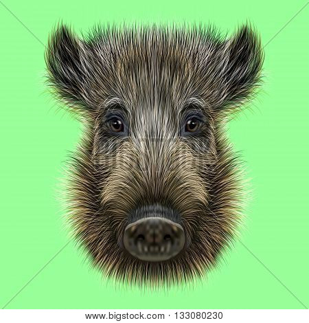 Illustrated of Wild boar. Formidable face of wild pig on green background.