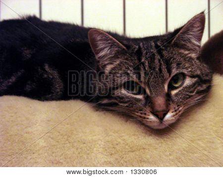 cute cuddly calm little peaceful cat at home poster
