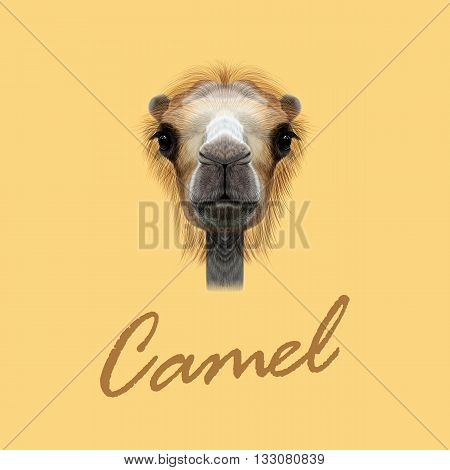 Vector Illustrated Portrait of Camel. Cute face of Camel on yellow background.