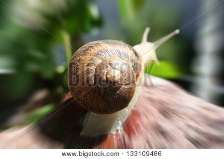 Snail Zoom Burst Close Up Stock Photo High Quality