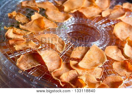 sweet potato chips dehydrating closeup on the tray