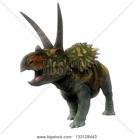 Coahuilaceratops Dinosaur on White - Coahuilaceratops was a ceratopsian herbivorous dinosaur that lived in the Cretaceous Period of Mexico.