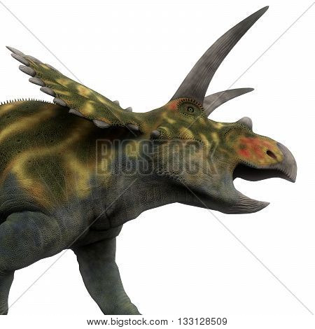 Coahuilaceratops Head - Coahuilaceratops was a ceratopsian herbivorous dinosaur that lived in the Cretaceous Period of Mexico.