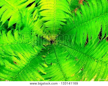 A look into the fern. Interesting perspective.