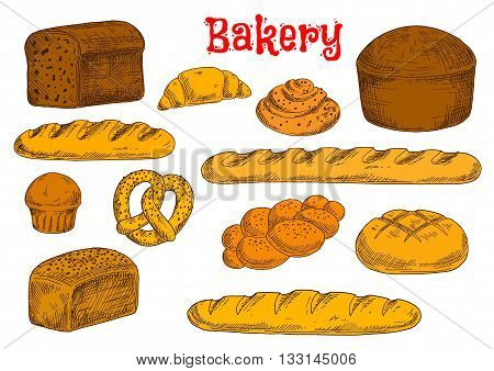 Fresh baked bread from rye, whole wheat and white flour sketch icons with french baguettes and long loaves, croissant, cinnamon rolls and cupcake, braided bun and pretzel, topped by poppy and sesame seeds