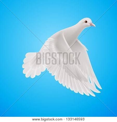 Flying white dove on blue sky background. Symbol of peace