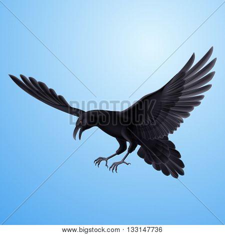 Aggressive flying raven on blue sky background