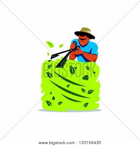 Gardener cutting a hedge with a garden pruner, close up. Isolated on a White Background