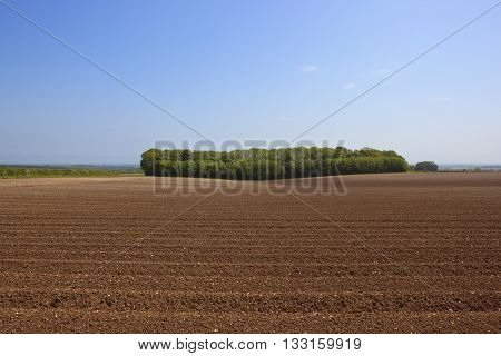 a leafy woodland copse beside potato furrows with a view of the vale of york under a blue sky poster