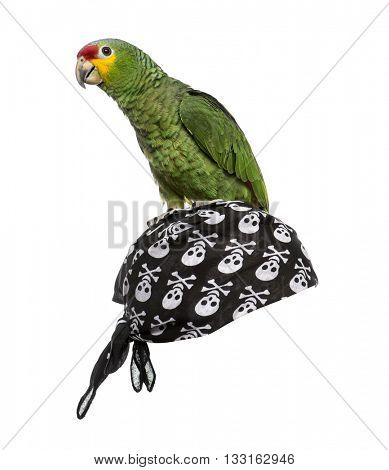 Red-lored amazon on a pirate bandana, isolated on white