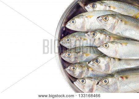 fresh mackerel fish on salver, isolated .