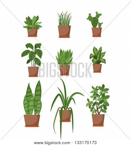 Set of potted plant isolated. Vector flat plant pot illustration. Collection of flat flower pot. Colorful plants in pot for your design. Home flower pot icons set