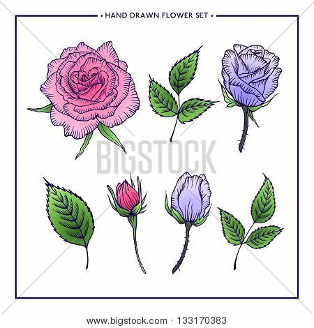 Set of flower roses and leaves, hand drawn rose, vector rose, design for wedding, birthday, greeting card, web, printing, flower shop, summer design
