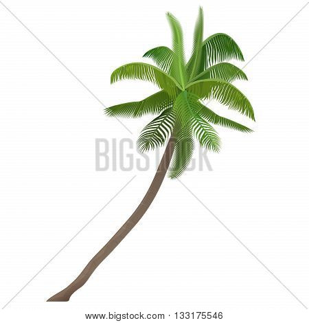 Exotic tropical Coco nut vector high detailed palm tree isolated