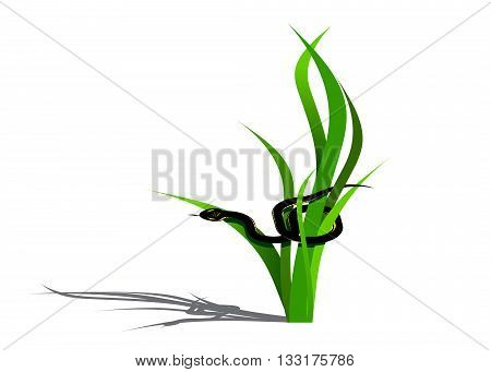 A green grass with a shadow and a black snake with a yellow pattern on a white background