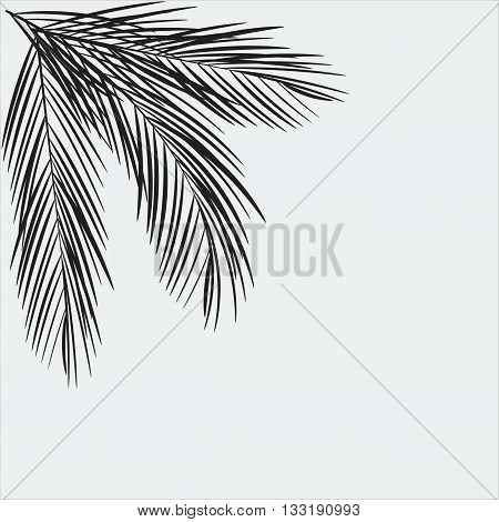Palm Leaf Vector Background Illustration. Palm Tree Leaves silhouette. Isolated vector with flat color
