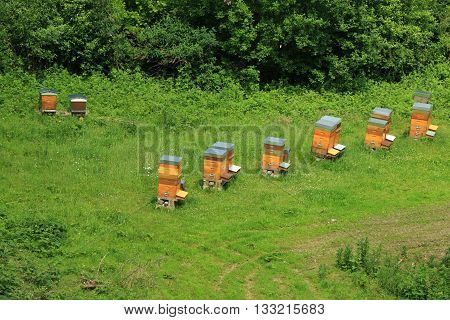 Seen on hives down from the citadel of Montreuil on sea, Pas-de-Calais, the North of France ,