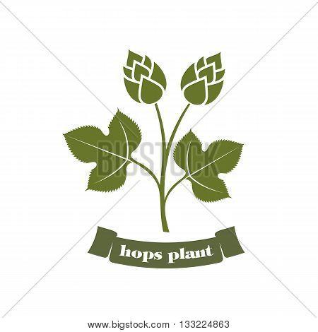 vector illustration hops on a white background hops plant, hop leaves, hop symbol, beer symbol, brewery emblem poster