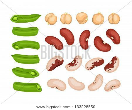Vector Beans Collection
