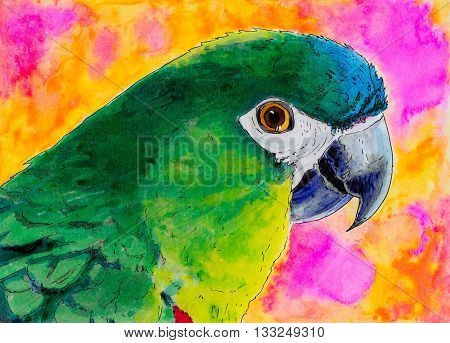 Original pen and ink portrait painting of a Hahn's macaw parrot.