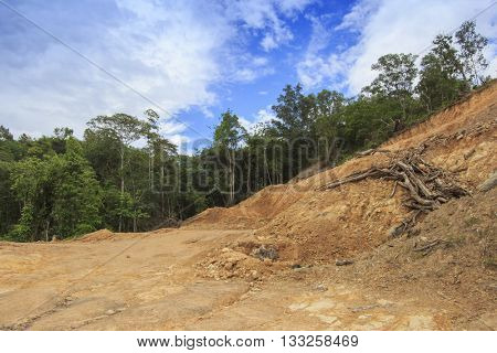Deforestation environmental destruction of rain forest in Borneo, Malaysia, for oil palm plantations.