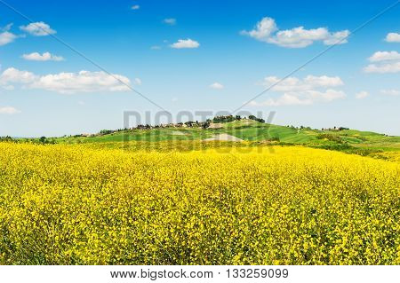 Fields Of Yellow Flowers And Blue Sky