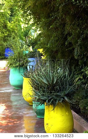 vertical picture of an exotic garden in morroco