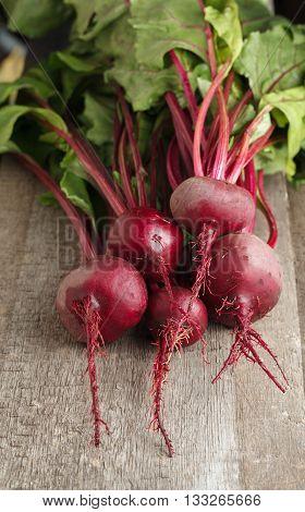 Red Beet Crop