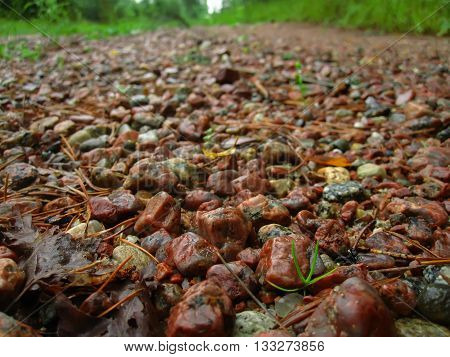 Small colored stones strewed the path in the woods