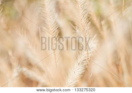 Abstract meadow background with grass in the meadow and sunset