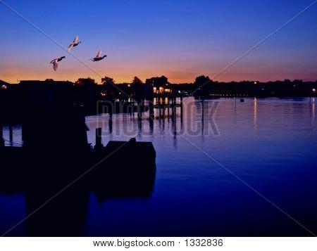Ducks  At Sundown