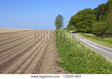 Country Road Beside Potato Field