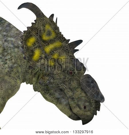 Pachyrhinosaurus Dinosaur Head 3D Illustration - Pachyrhinosaurus was a ceratopsian herbivorous dinosaur that lived in the Cretaceous Period of Alberta Canada.