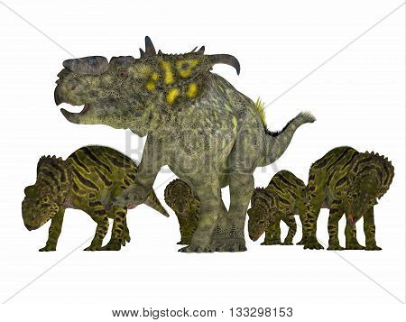 Pachyrhinosaurus Dinosaur with Young 3D Illustration - Pachyrhinosaurus was a ceratopsian herbivorous dinosaur that lived in the Cretaceous Period of Alberta Canada.