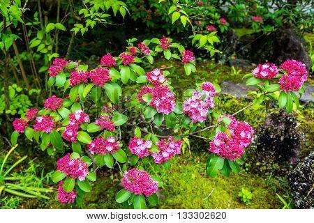 Cherry blossom in Koko-en garden - Himeji, Japan