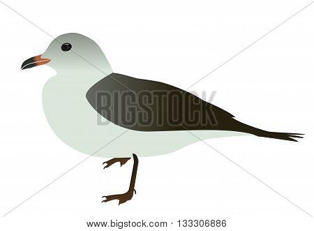 Seabird seagull. Isolated on White background. Vector Illustration. EPS10