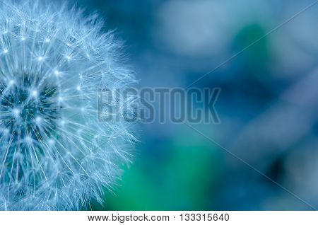 Beautiful abstract image of a flower close up