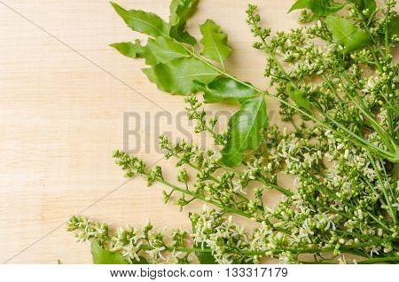 Tender medical neem leaves and flower on wood background