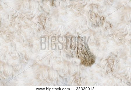 Real dog pelt abstract pattern ready for background