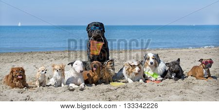 dogs standing on the beach in France