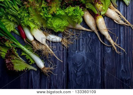 Spring Onions Radishes And Salad