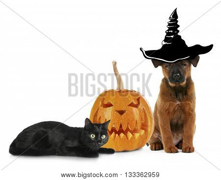 Cute kitten and dog wearing funny costumes for Halloween, isolated on white
